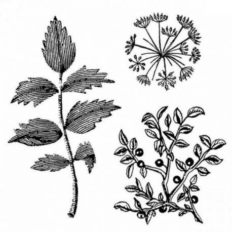 """Sello de alta definición """"Herbarium"""" de Stamperia 10x10cm"""